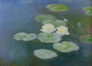 Water lilies evening effect